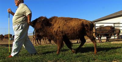 Pan Buffalo Rancher