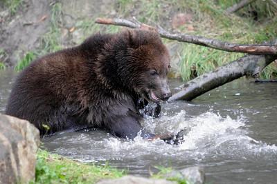 GERMANY ZOO BEARS