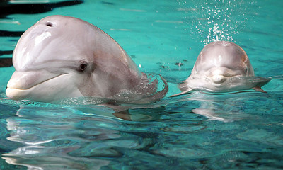 GERMANY DOLPHINS