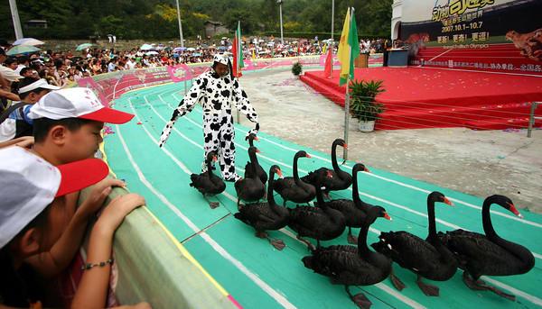 China Animal Olympics