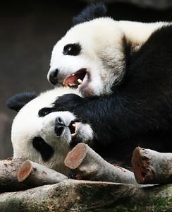 74843747JO001_Pandas