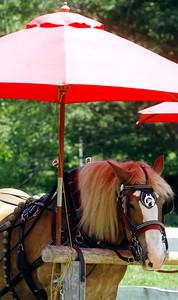 Horse Shade