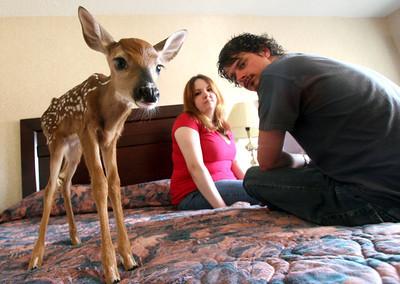Canada Motel Deer