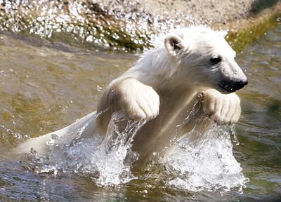 GERMANY WEATHER POLAR BEAR