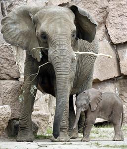GERMANY ELEPHANT BABY