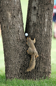 Pro Am Golf Tournament