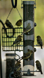 SAC story on how residents can attract birds to their yards and help them thrive