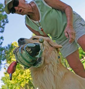 "Faye Okurowski of Palmdale praises her dog Dickens— a 2 1/2-year-old Golden Retriever after he fetched a wooden duck as she and her husband Ed (not in photo) train him to fetch ducks and pheasants by using wooden models for a ""WC"" working certificate on a large grass field at Lancaster City Park on Monday, July 30, 2007. (John Lazar/L.A. Daily News Staff Photographer)"