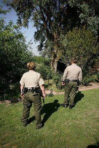 BIG CAT--Sheriff deputies surround a tree with a bobcat in Friendly Valley thursday afternoon.  The bobcat, which appeared to be injured, fled before Fish and Game arrived on the scene.   Photo by David Crane/Staff Photographer.