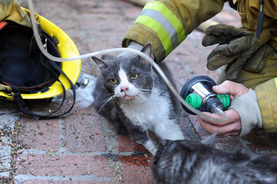Los Angeles CIty Firefighter Mike Hayes and Brian Coulas give oxygen to a pair of cats rescued from a burning house in the 21900 block of Woodland Crest Dr. in Woodland Hills, CA.  Tuesday, April 12, 2011. (Hans Gutknecht/Staff Photographer)