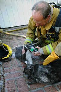 Los Angeles CIty Firefighter Mike Hayes gives oxygen to a pair of cats rescued from a burning house in the 21900 block of Woodland Crest Dr. in Woodland Hills, CA.  Tuesday, April 12, 2011. (Hans Gutknecht/Staff Photographer)