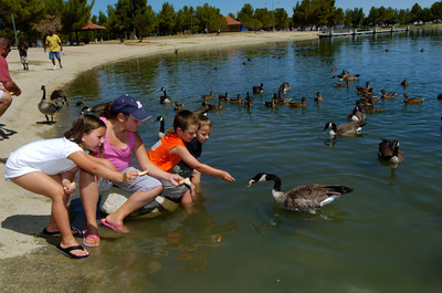 L to R,  Makenna Gray,6 of Lancaster, her cousins Ali Gray,11 and Mason Gray,6, who are visiting from Washington, and Makenna's brother Dillon Gray,8, feed the ducks at Apollo Park in Lancaster on Friday.