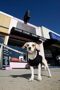 D.O.G. Pet Boutique