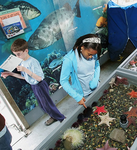 Zahara Thomas, 12, of West Hills was among a group of kids who got to pet tiger sharks and star fish in a shallow display in Long Beach Aquarium of the Pacific's Aquarium on Wheels outreach truck on Saturday, June 2, 2007 during a three-day camp at Camp Hess Kramer in Malibu, CA, offered by the House Ear Institute which promotes hearing research and education for families with children who are deaf or have partial hearing loss. Kids participated in activities such as the aquarium touch tank and a wildlife presentation along with acting and percussion workshops with peers who share their disability while their parents gathered for support sessions to learn about new developments in dealing with hearing loss.  (John Lazar/L.A. Daily News Staff Photographer)