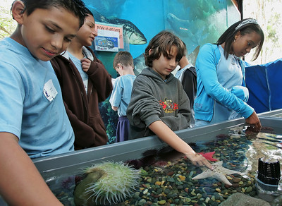 A group of kids pet tiger sharks and star fish in a shallow display in Long Beach Aquarium of the Pacific's Aquarium on Wheels outreach truck on Saturday, June 2, 2007 during a three-day camp at Camp Hess Kramer in Malibu, CA, offered by the House Ear Institute which promotes hearing research and education for families with children who are deaf or have partial hearing loss. Kids participated in activities such as the aquarium touch tank and a wildlife presentation along with acting and percussion workshops with peers who share their disability while their parents gathered for support sessions to learn about new developments in dealing with hearing loss. (John Lazar/L.A. Daily News Staff Photographer)