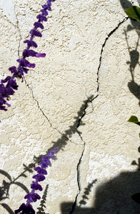 On the exterior of Debbi Steinfeld's home built in 1919 a crack in the stucco behind the flowers is seen in Los Angeles.  (Tina Burch/Staff Photographer)