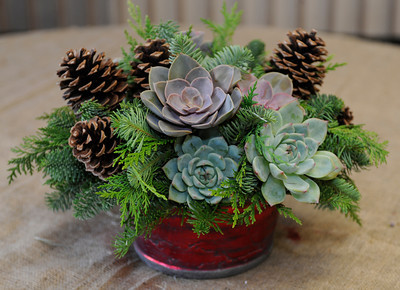 This Hanukkah inspired floral centerpiece uses succulents, pine boughs and pine cones. Mark Held has designed a variety of floral arrangements for the holidays at Mark's Garden, located on Ventura Blvd. in Sherman Oaks, CA 12/08/2011(John McCoy/Staff Photographer)