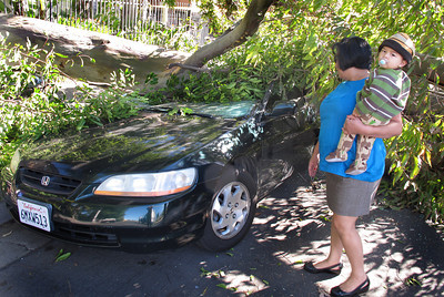 A 50 foot Eucalyptus tree fell at about 1030 p.m. Monday night during high winds in the 6900 block of Bassett Street in Canoga Park.  Miriam Linares's Honda was crushed from the weight of the tree.  Miriam holds her grandson Emiliano as she views the damage.   (Dean Musgrove/Staff Photographer)