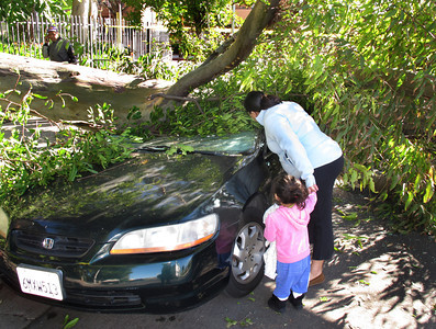 A 50 foot Eucalyptus tree fell at about 1030 p.m. Monday night during high winds in the 6900 block of Bassett Street in Canoga Park.  Miriam Linares's Honda was crushed from the weight of the tree.  Miriam's daughter Lucia Agurre and grand-daughter Hermione look at the damage. (Dean Musgrove/Staff Photographer)