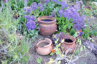 Paul Weinberger transformed the hillside of his Woodland Hills backyard into a Mediterranean garden with California native plants. (Hans Gutknecht/Staff Photographer)