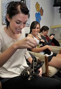 """(l-r) Kate DeCrosta, Marissa Pistone and Bridget Kleinberg get familiar with kittens. People got upclose and personal looks at cats in the Burbank Animal Shelter during the Cats Days of Summer, hosted by Found Animals Foundation. The one-day Adopta-thon that took place simultaneously at 16 LA animal shelters. Reduced adoption fees on all kittens, cats, puppies, dogs and other pets during """"kitten season. Burbank,, CA 6-17-2011. (John McCoy/Staff Photographer)"""