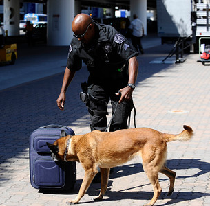 LAX police demo how their bomb sniffing dogs work during a press conference at Los Angeles International Airport  about how air travel has changed since the terrorist attacks of Sept 11,2001, and provide an overview of the numerous security measures implemented at LAX during the past 10 years.Sept 7,2011 photo by Gene Blevins/LA DAILYNEWS