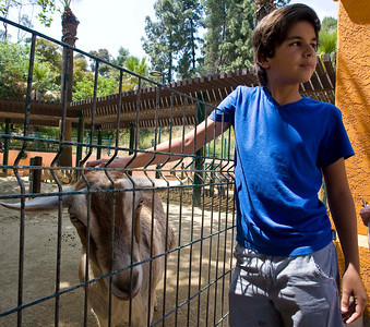 Twelve-year-old Nicolas Velez of Valencia pets a friendly dairy goat in the children's area. Visitors spend their afternoon at the Los Angeles Zoo in Los Angeles on Friday, June 17, 2011. The city-owned Los Angeles Zoo is strapped for cash, and talks have begun about whether the attraction should be privately funded.  (Maya Sugarman/Staff Photographer)