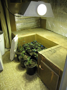 This image was taken at a home in the 18200 bock of East Avenue S in Palmdale on Nov. 29, 2011 after Los Angeles County Sheriff's deputies discovered a marijuana-growing operation on the premisis. (Photo courtesy L.A. County Sheriff's Department)