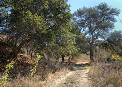 open space dedicated in Elsmere Canyon