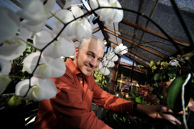Alfred Hockenmaier in one of his two North Hills greenhouses where he raises orchids. (John McCoy/Staff Photographer)