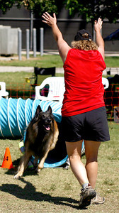 Teri Meredyth congratulates her 6-year-old Belgian Tervuren, Makai,  for completing the obstacle course in the agility competition during the Paws in the Park event held at Balboa Park in Encino, CA. September 15, 2007. (Ernesto Elizarraraz, Special to the Daily News)