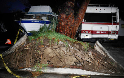 A huge 125 ft tree fell over from the heavy rain and winds onto a house at the 8000 block of Hatillo St. that did no damage, as  heavy bands of rain moved across Los Angeles County, and triggered warnings from the National Weather Service of possible localized ponding and flooding across the Southland. Winnetka  CA.March 25.2012. Photo by Gene Blevins/LA Daily News
