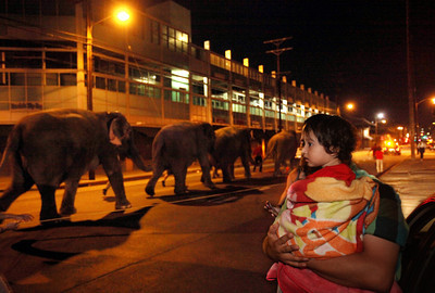 LOS ANGELES (July 19, 2011) Ringling Bros. and Barnum & Bailey circus elephants on a moonlight march to STAPLES Center, where eight Asian elephants, along with an international cast  will perform from July 20-24 in the all-new 141st edition of ÒThe Greatest Show On Earth,Ó Fully Charged.  Photo by Stefano Paltera for Feld Entertainment