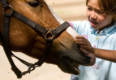 """Sydney Cort prepares to braid the hair of Marcus, a school horse at Mill Creek Equestrian Center in Topanga, Calif., on Friday, Aug. 19, 2011. """"I just wish he were mine,"""" said Cort of Marcus.  (Maya Sugarman/Staff Photographer)"""
