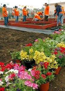 """The Team Depot works on a """"Literacy Garden"""" at Shirley avenue Elementary School on Thursday, May 31, 2007 in Reseda, CA.  (Tina Burch/Staff Photographer)"""