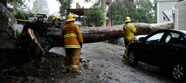 LA city firefighters look over a tree that came down and destroyed a garage during the heavy rain storm that came through the valley that caused major flooding and blown down trees. Woodland Hills. March 20,2011. Photo by Gene Blevins/LA Daily News