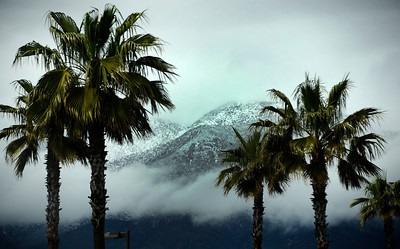 Snow cap mountains see through palm trees from the heavy rain storms that came through from last night. Rancho Cucamonga  March 21,2011. Photo by Gene Blevins/LA Daily New