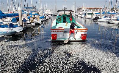 Fish Die Off