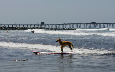 Surf Dog Contest
