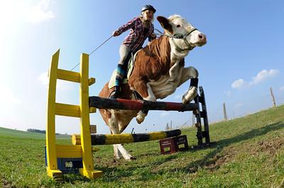 APTOPIX Germany Jumping Cow