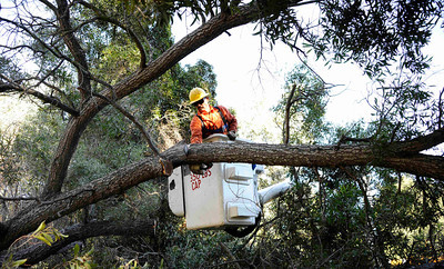 DWP workers cut away after a huge tree came down and has block the only way out for some 75 home owners on Irdell st. and Fryman rd. in Studio City. CA. dec 30,2010   Dec 28,2010. Photo by Gene Blevins/LA DailyNews