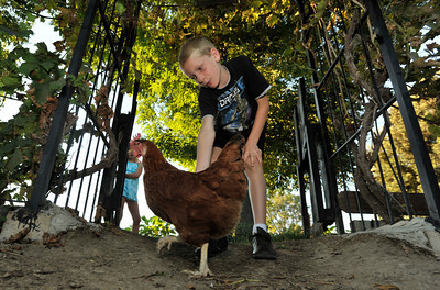 Zack Childers,8, plays with a chicken in his back yard. Robert Childers and his kids have four chickens in thier backyard that provide the family with entertainment, and fresh eggs. Northridge, Ca 7-19-2011. (John McCoy/Staff Photographer)