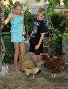 Tori,11, and Zack,8, Childers with chickens in their backyard. Robert Childers and his kids  have four chickens in thier backyard that provide the family with entertainment, and fresh eggs. Northridge, Ca 7-19-2011. (John McCoy/Staff Photographer)