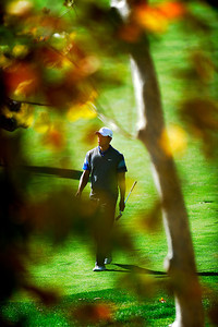 Tiger Woods walks up to the 2nd green, on his way to making an eagle in the second round of The Chevron World Challenge at Sherwood Country Club. Thousand Oaks, CA 12/02/2011(John McCoy/Staff Photographer)