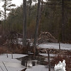 Beaver lodge and dam at Pudding Pond, North Conway... January 8, 2011