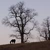 Dusk on the hillside… December 3, 2013.