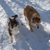 Trail buddies Joey and Gracie… January 24, 2014.