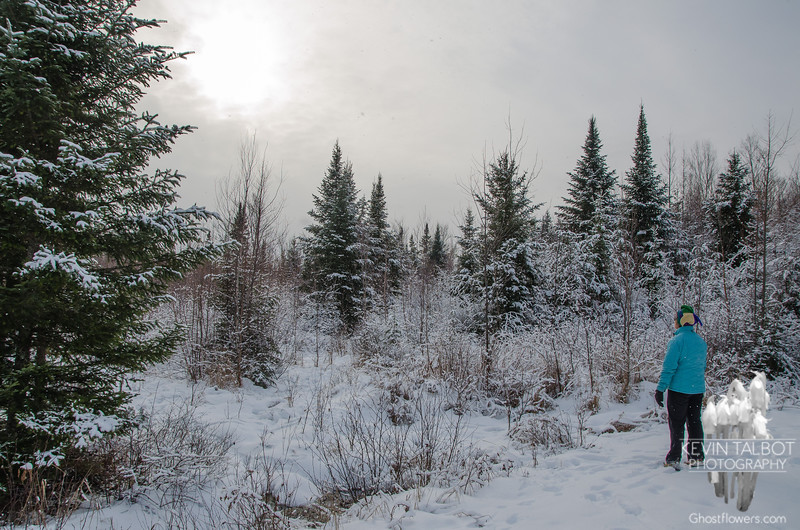 In a forest glade… December 21, 2014.
