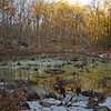 Vernal Pool at Ravenswood, Gloucester, Massachusetts… January 12, 2014.