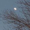 Moonrise and maple buds… April 10, 2014.